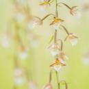 palustris_190310