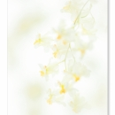 Oncidium Tiny Twinkle_0093