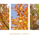 Autumn colors II