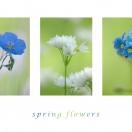 Springflowers II
