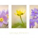 Springflowers I