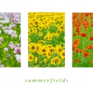 Sommerfields